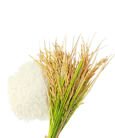 Rice's grainsEar of rice isolate on white background. Standard-Bild