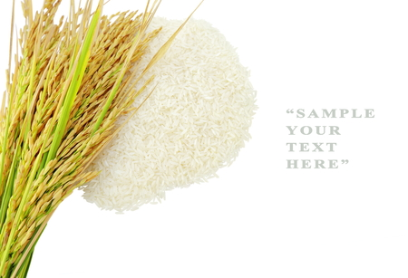 paddy fields: Rices grainsEar of rice isolate on white background.