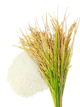rice harvest: Rices grainsEar of rice isolate on white background.