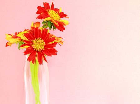 glass vase: Close-up beautiful flower in a glass vase. Stock Photo