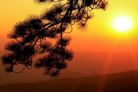 phukradueng: Sunrise and silhouette tree on beautiful colors sky at Phukradueng, Thailand.