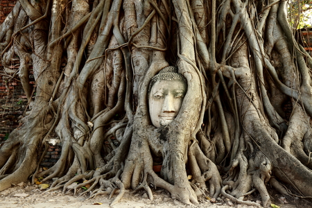 historic site: Head of Buddha Statue with the Tree Roots at Wat Mahathat, historic site of Ayutthaya province, Thailand. Stock Photo