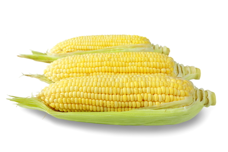 close up corn isolated on white background.