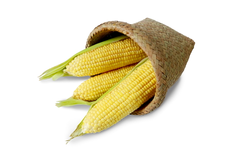 Corn in the basket isolated on white background.
