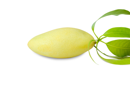 Closeup ripe single mango isolated on white background.