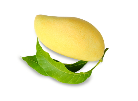 Ripe single mango isolated on white background. Standard-Bild