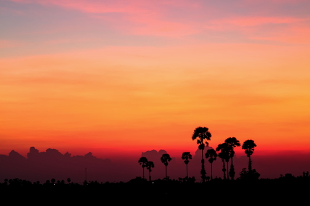 Silhouettes sunset on field at tropical countryside of Thailand. Standard-Bild