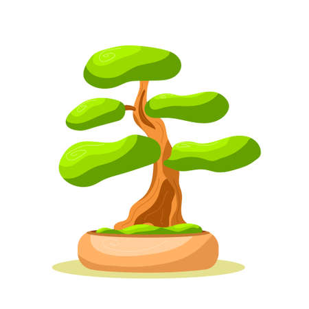 Bright isolated bonsai tree in the pot. Small tree. Vector isolated. White background. Flat style