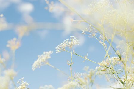 Gentle wild flower on a background of blue background. Against the blue sky with clouds