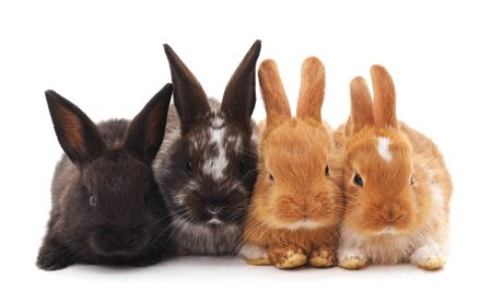 Four little rabbits isolated on a white background. Banque d'images