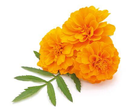 Drei orangefarbene Blumen isoliert auf weißem Hintergrund.