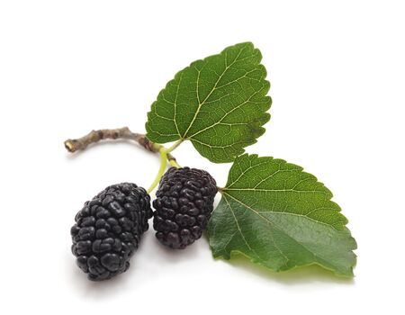 A mulberry with leaves is isolated on a white background.