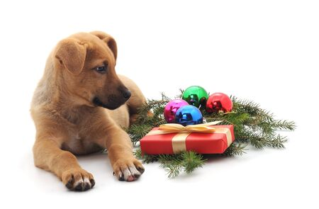 Little New Year's puppy with toys and gifts isolated on a white background.