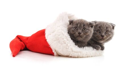 Little kittens in a Christmas hat isolated on a white background.