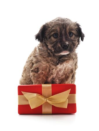 Puppy with gift isolated on a white background. 免版税图像