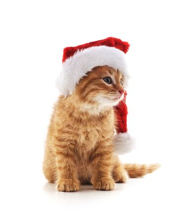 Little kitten in a Christmas hat isolated on a white background.