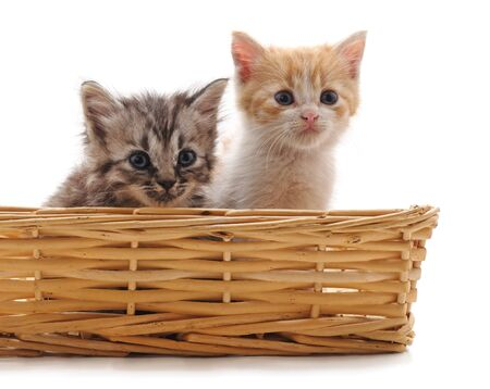 Two small kittens in the basket isolated on a white background.