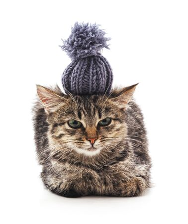 Little gray kitten in a funny hat isolated on a white background.