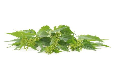 Green nettle with bloom isolated on a white background.