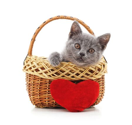 Little gray kitten in the basket isolated on a white background. Stok Fotoğraf