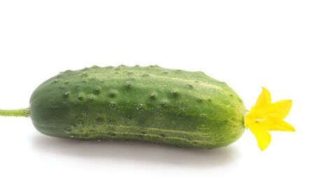 One green cucumber isolated on a white background. Stockfoto