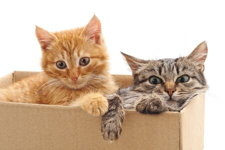 Little kittens in the box isolated on a white background.