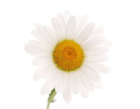 Beautiful white chamomile isolated on a white background.