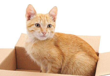 Little cat in the box isolated on a white background.