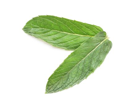 Two leaves of mint isolated on a white background.