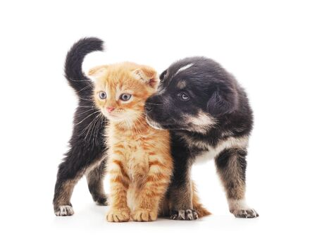 Black dog with a kitten isolated on a white background.