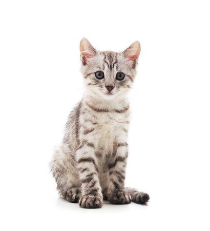 Piccolo gattino grigio isolato su sfondo bianco.