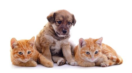 Two cats and dog isolated on a white background.