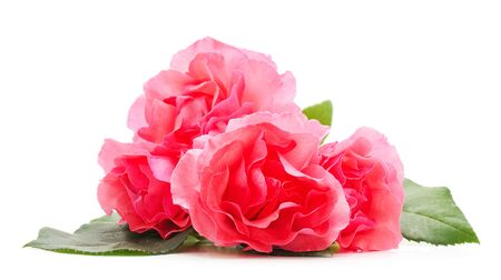 Beautiful pink flowers isolated on a white background.