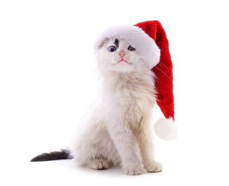 Cat in Christmas hat isolated on a white background.