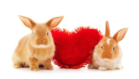 Two rabbits with toy heart isolated on a white background.