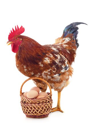 Brown chicken with an egg isolated on a white background.
