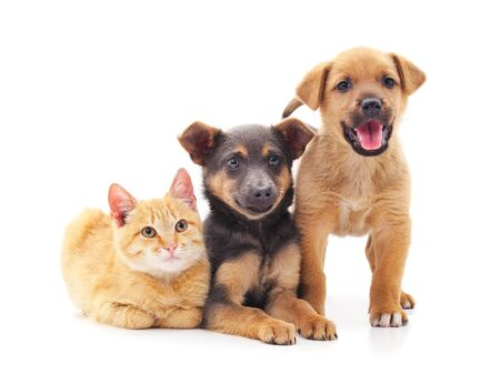 Two dogs and a cat isolated on a white background.