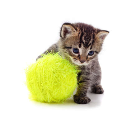 Gray kitten with a ball isolated on a white background. Stok Fotoğraf