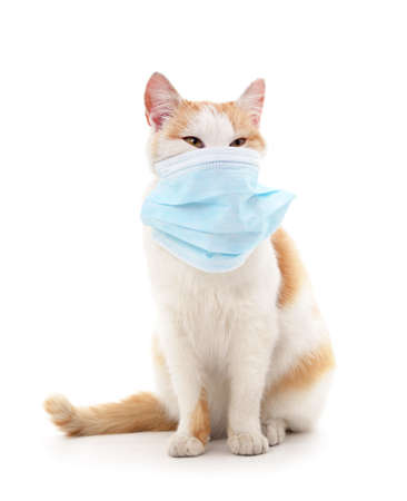 Cat in medical mask isolated on a white background.