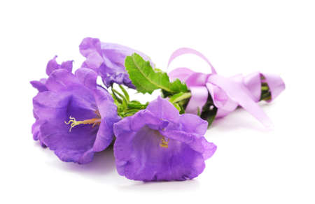 Beautiful violet flowers isolated on a white background. Stok Fotoğraf