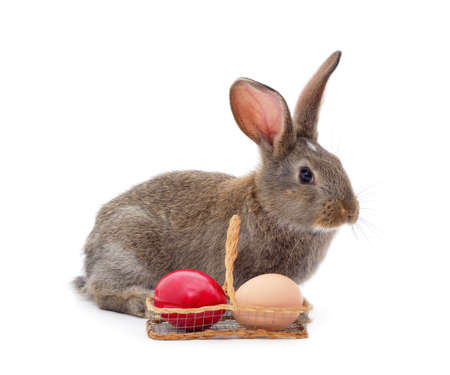 Rabbit with eggs isolated on a white background.