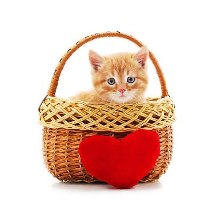 Little kitten in the basket with a toy heart isolated on a white background.