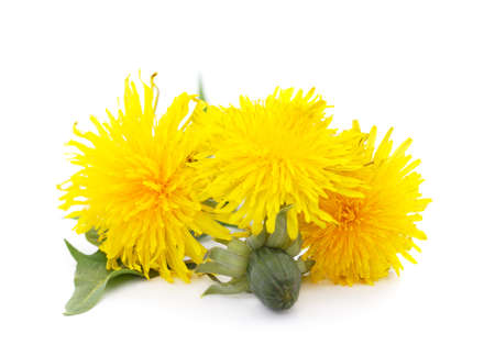 Bouquet of dandelion isolated on a white background.