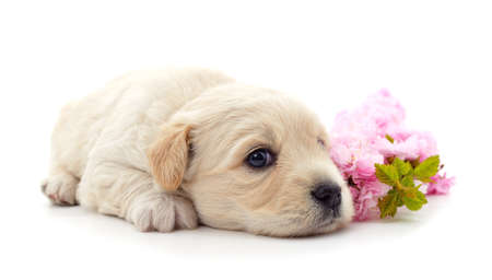 One white dog with flowers isolated on a white background. Stok Fotoğraf