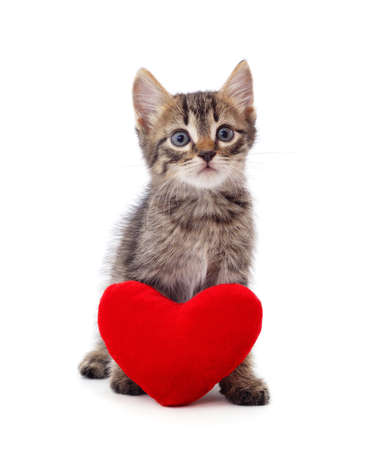 Little cat with a heart isolated on a white background. Stok Fotoğraf