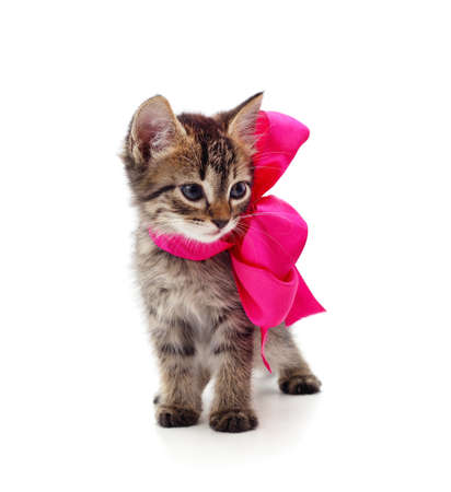 Little gray kitten with beautiful ribbon isolated on a white background. Stok Fotoğraf