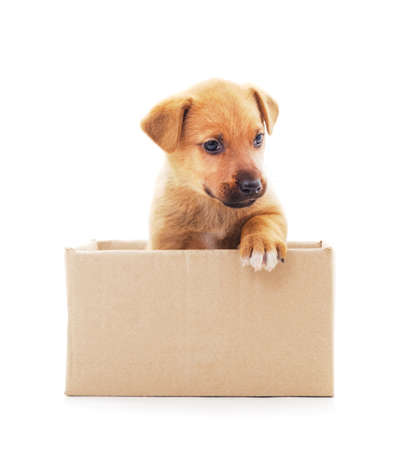 One little dog in the box isolated on a white background. Stok Fotoğraf