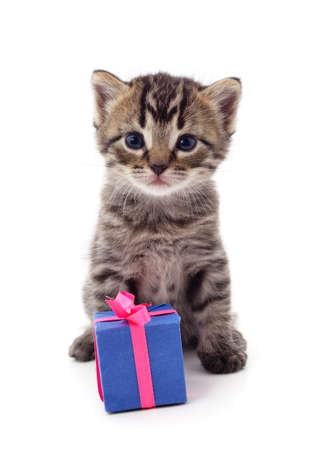 Gray kitten with a gift isolated on a white background.