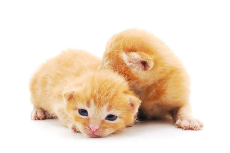 Two small kittens isolated on a white background. Stok Fotoğraf