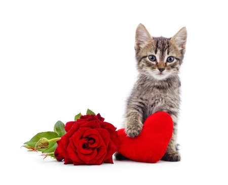 Kitten with toy heart and red rose isolated on a white background.